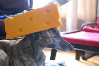Dawn Sports Cheesehead