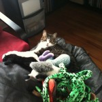Enzo and Stuffed Animals