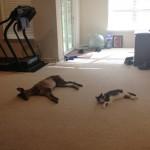 Tandem floor laying